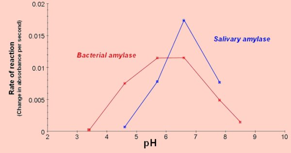 enzymatic activity of salivary amylase Biochem lab - enzymatic activity of salivary amylase - download as word doc (doc / docx), pdf file (pdf), text file (txt) or read online.