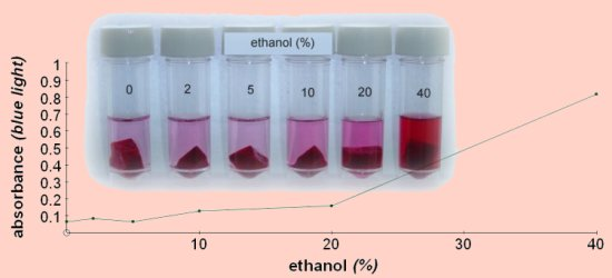 beetroot pigment Beetroot evaluation as biology watch announcements - we are only interested in the pigment diffusing out from beetroot vacuole due to the temperature.