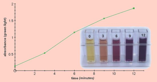 iodine test on enzymes Special enzyme for starch degradation in pomaceous  panzym ht 300  enzyme is the high concentrated  applying the iodine test and enzymatic starch.